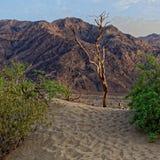 Dynlandskap, Death Valley, Kalifornien Arkivfoton