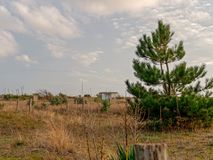 dynsand i forte- deimarmistrand Fotografering för Bildbyråer