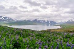 Dyrafjordur blisko Pingeyri miasteczka przeglądać od Sandafell wzgórza Obraz Stock