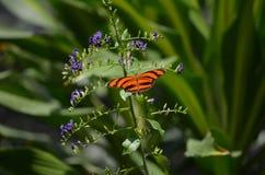 Dyrbar orange ek Tiger Butterfly Close Up Fotografering för Bildbyråer