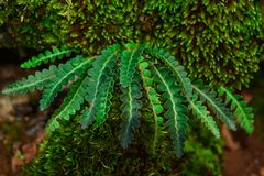 Dyrbara örttar i natur arkivbilder