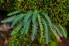 Dyrbara örttar i natur royaltyfri fotografi
