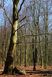 dyrehave不生叶的公园结构树 库存图片