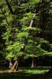 dyrehave倾斜的公园结构树 库存照片