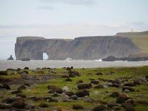 Dyrholaey Исландия Стоковая Фотография RF