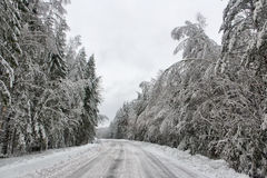Dyrt i snöig trän Royaltyfria Bilder