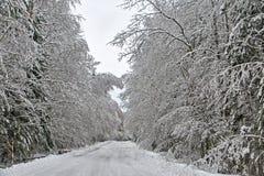 Dyrt i snöig trän Arkivfoto