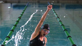 Dysponowany pływaczki doskakiwanie, doping w pływackim basenie i zbiory wideo