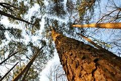 dystansowi krajobrazowi słońca zmierzchu drzewa Fotografia Royalty Free