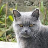 Dyster grå katt utomhus Arkivbild