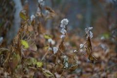 Dyster höstlövverk längs Bruce Trail Royaltyfri Fotografi