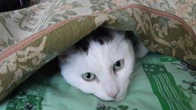Dyster katt Fotografering för Bildbyråer