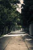 Dyster korridor med många träd lite varstans Royaltyfri Bild
