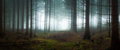 Dyster och mörk skog Royaltyfri Fotografi