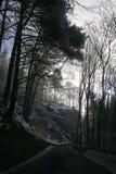dyster skog Fotografering för Bildbyråer