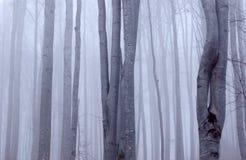 dyster skog för bokträd arkivbilder