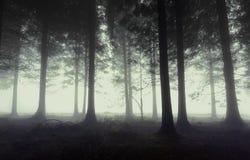 Dyster skog med dimma royaltyfria foton