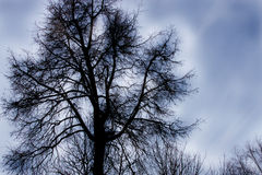 dyster tree Royaltyfria Foton