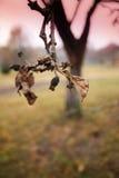 dyster tree för filial Royaltyfri Bild