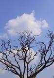 Dystert dött träd med moln arkivbild