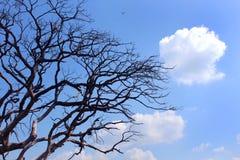Dystert dött träd med moln royaltyfri fotografi