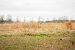 Dystert gräsfält på en molnig dag arkivfoto