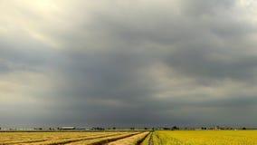 Dystert väder på risfältet Royaltyfria Foton