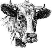 Dyszy krowa royalty ilustracja
