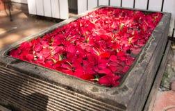 Dywan czerwony płatków rosnąć Obraz Royalty Free