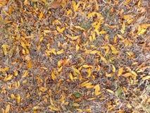Dywan jesień liść zdjęcia royalty free