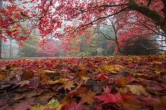 Dywan jesień liść Fotografia Stock