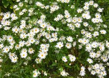 Dywan jest kwiatu łąką zdjęcia royalty free