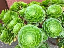 Dywan jest kwiatu łąką fotografia royalty free