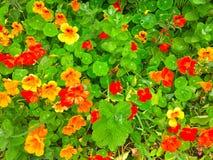 Dywan jest kwiatu łąką fotografia stock