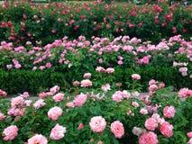 Dywan jest kwiatu łąką zdjęcie stock