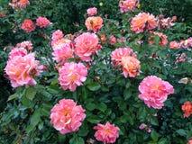 Dywan jest kwiatu łąką obrazy royalty free