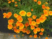 Dywan jest kwiatu łąką zdjęcia stock