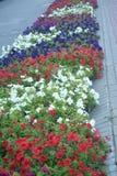 Dywan kwiaty obraz royalty free