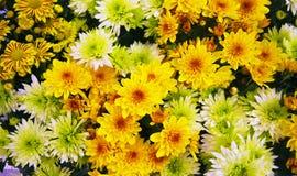 Dywan kwiaty obrazy stock