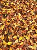 Dywan liście zdjęcie stock
