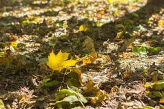 Dywan susi liście w parku obrazy stock