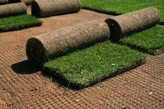 Dywanowa trawa Zdjęcie Stock