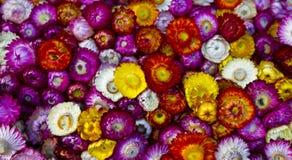 dywanowy kwiat Ilustracji