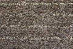 Dywanowy poil. Fotografia Stock
