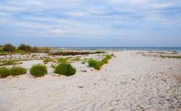 Dzharylhach海岛和它的海湾是Dzharylhach全国自然公园的一部分 欧洲,乌克兰 免版税图库摄影