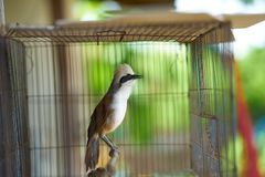 Dzięcioł lub ptak w klatce zdjęcia royalty free