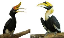 Dzięcioła ptak odizolowywający fotografia royalty free