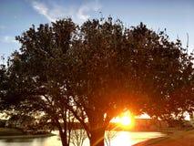Dziękczynienia drzewo obraz royalty free