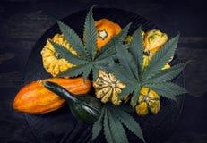 Dziękczynienia tło z jesiennym kabaczkiem, gurdami i cannabi, obrazy stock