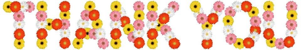 Dziękuje ciebie z kwiatu kwiatu naturą odizolowywającą na bielu Zdjęcia Royalty Free